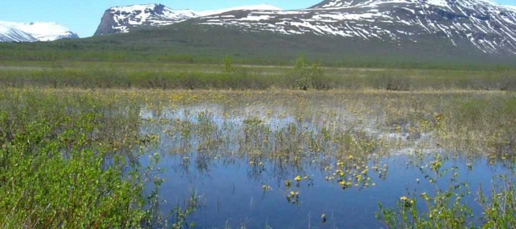 Vandring i Lapplandsfjällen